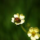 Honey Bee  by Gypsykiss