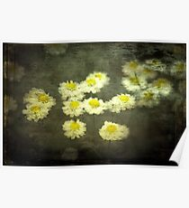 Daisies in Grunge Poster