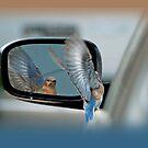 Bluebird in my Rear View Mirror by Bonnie T.  Barry