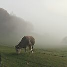Cow in Fog by Steve Mezardjian
