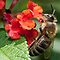 BEES WASPS HORNETS ON RED ORANGE YELLOW