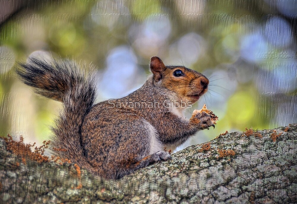 Squirrel by S Gibbs