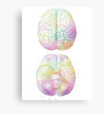 Ancient Brain Drawing - Type D Canvas Print