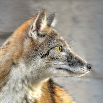 Fox by venny