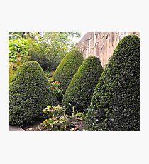 Topiary Garden Photographic Print