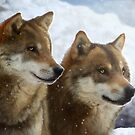 Twin Wolves by Daniel Ranger
