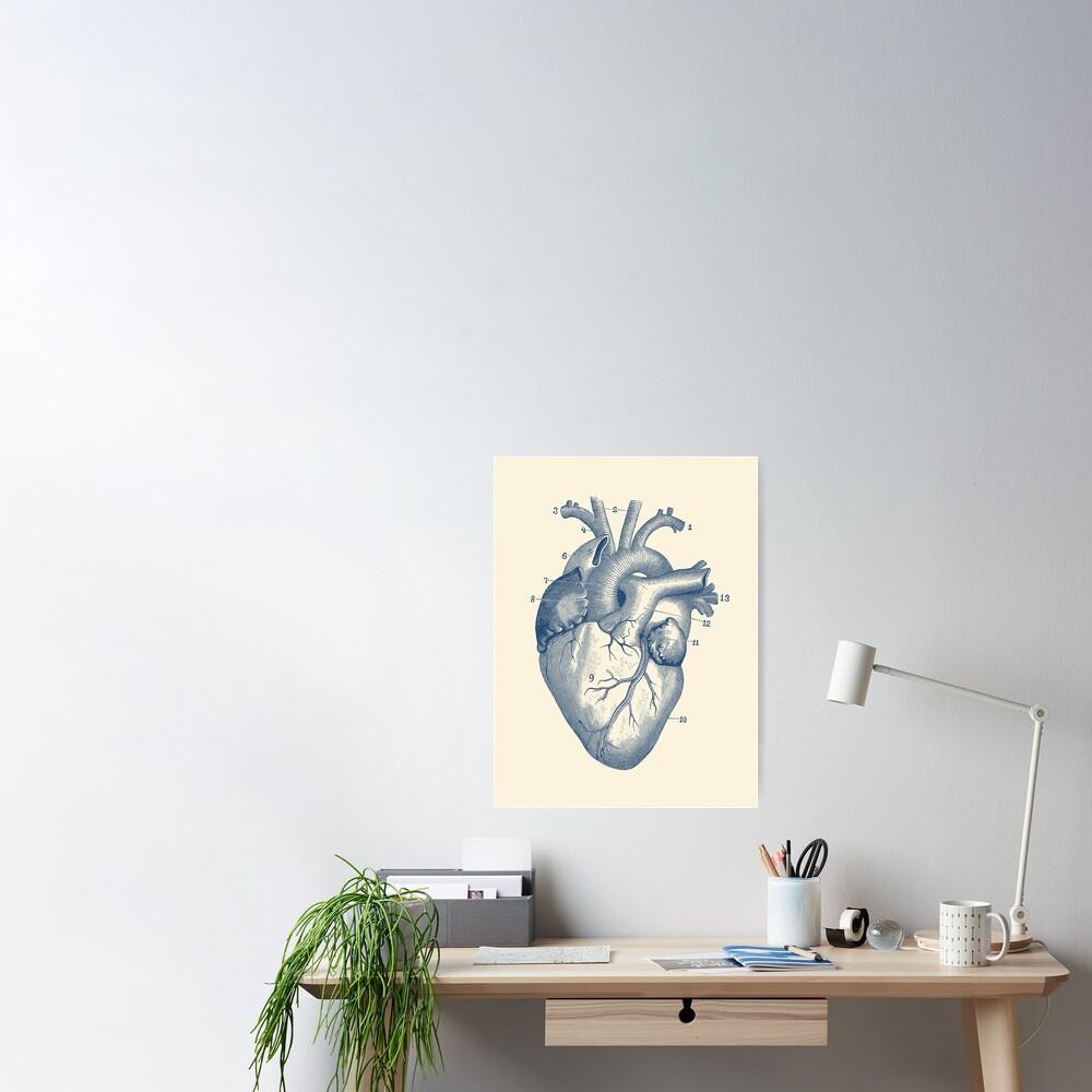 Human Heart Diagram - Vintage Anatomy  Poster