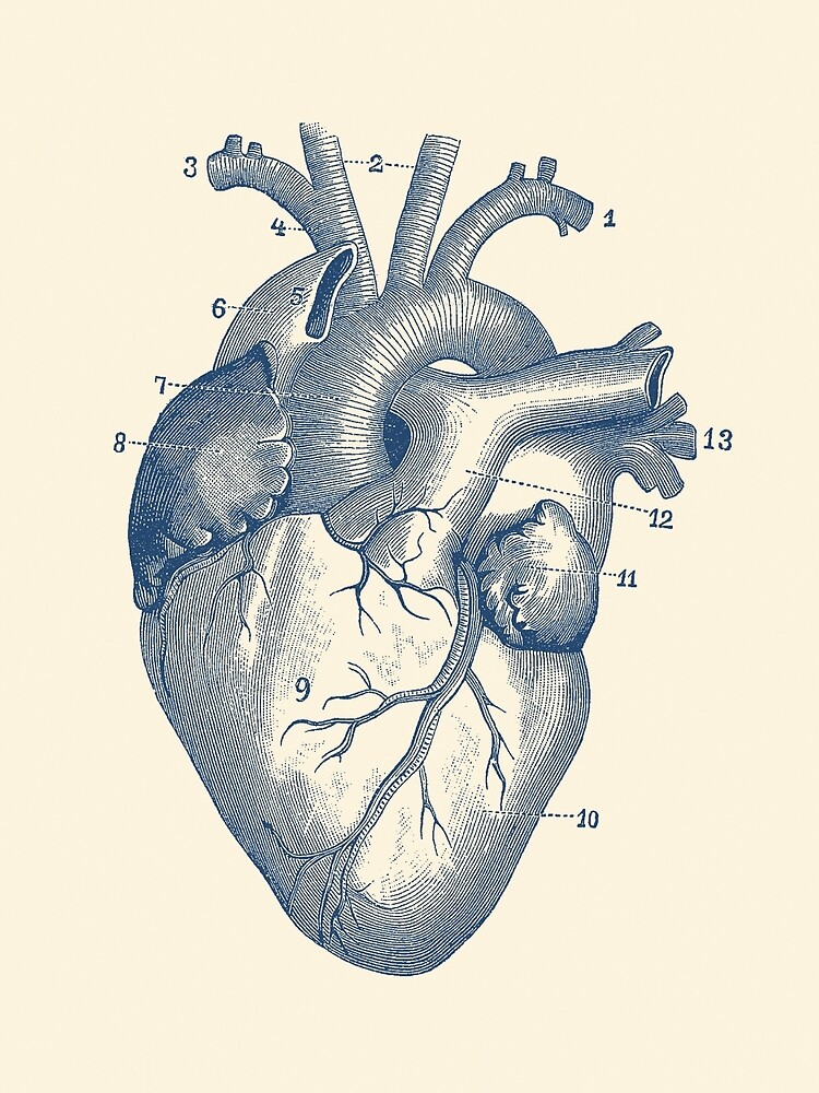Human Heart Diagram - Vintage Anatomy  by VAposters