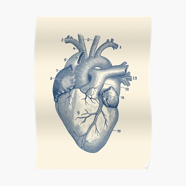 Human Heart Diagram - Vintage Anatomy  Poster