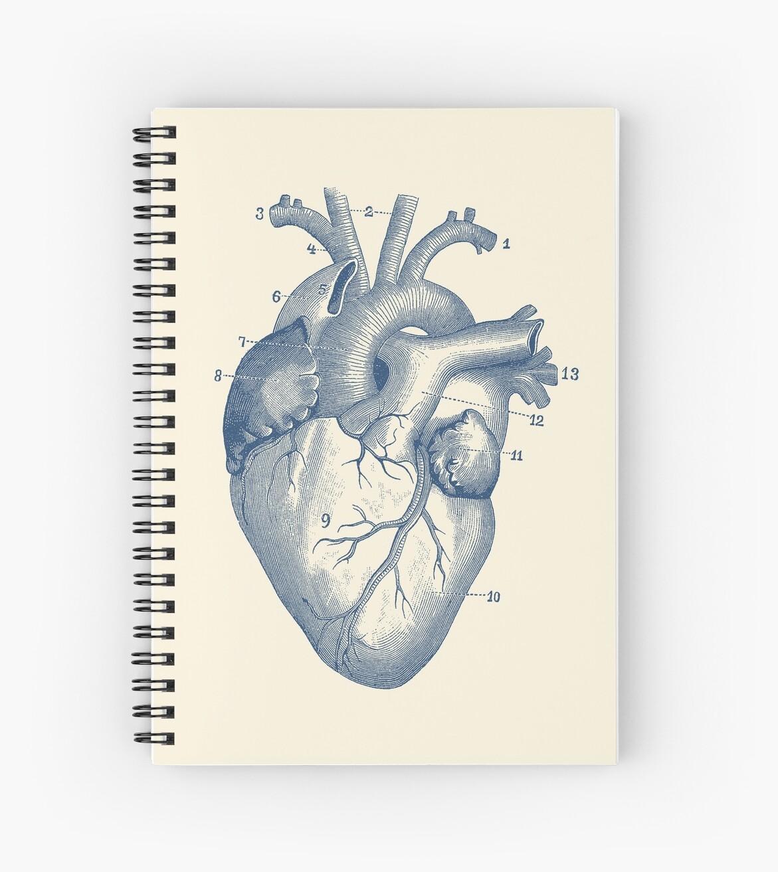 Cuadernos de espiral «Diagrama del corazón humano - Anatomía de la ...