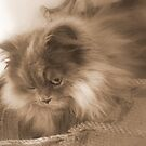 Cat in a basket by Mishaa