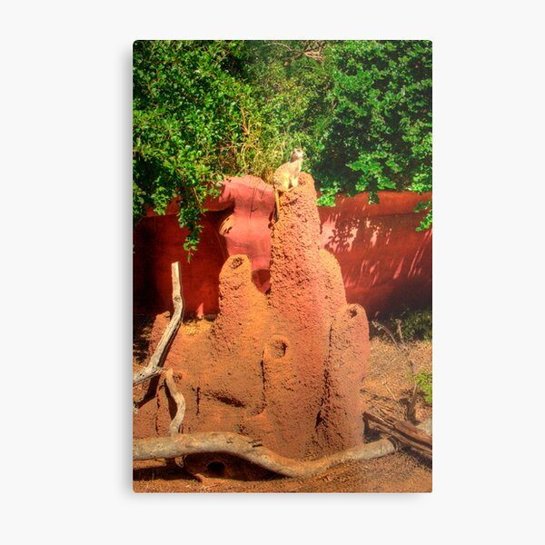 MeerKat On Guard Metal Print