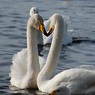 'Lovebirds?' by Maureen Brittain