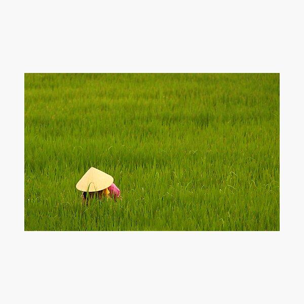 Rice Paddy-field Photographic Print