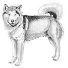 Alaskan Malamute by doggyshop