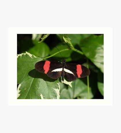 Orange Eyes --- Small Postman Butterfly Art Print
