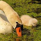 Mother & Child by Jo Nijenhuis