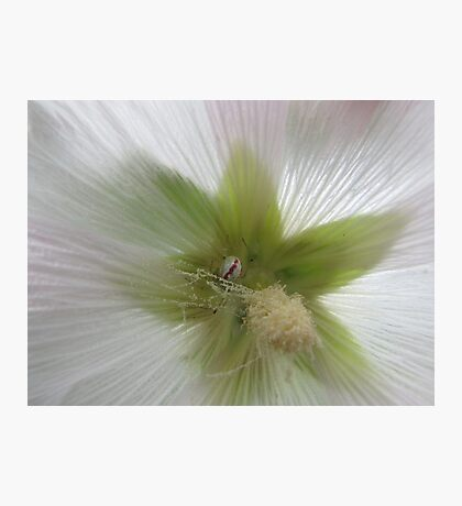 Spider and flower in harmony Photographic Print