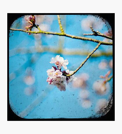 pink on blue Photographic Print