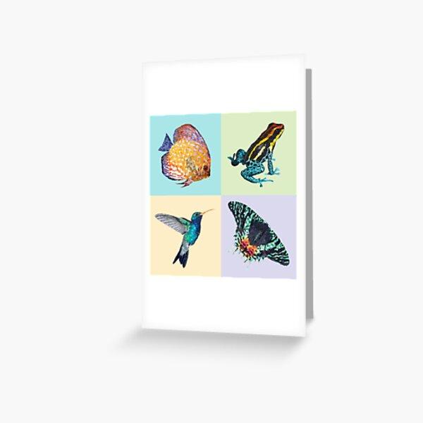 Colibri Frog Fishie Moth Animal Illustrations Greeting Card