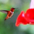 Hummingbirds Drink Nectar for Strength – Samuel 17:1-51 by Laura Puglia