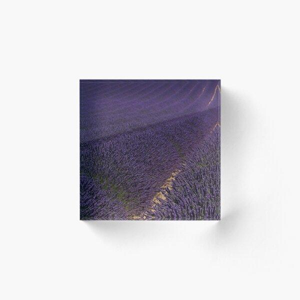 Lavender fields in Alpes de Haute, Provence, Plateau de Valensole in France. Acrylic Block