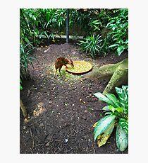 Animal Feeding At The Zoo Photographic Print