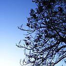 Bowling Green Blue Sky by elasita