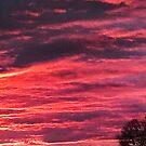 Campus Sunset by TastefulGamer21