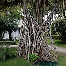 Puerto Plata Tree With Roots Above Ground by Vickie Emms