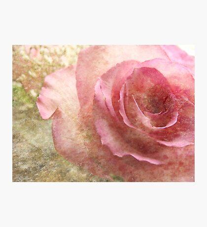 (Texturekalender) Eine Rose (für ana belaj) Fotodruck
