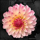 Pink Flower Art for Fashion and Home decor by Sarah Curtiss