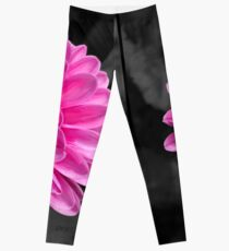 Bright pink flower with black background Leggings
