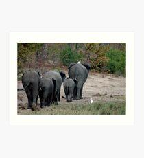 Elephantline Art Print