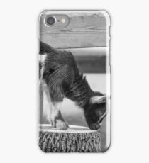 Young Goat iPhone Case/Skin
