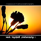 Flower Silhouette At Sunset by Mark Hayward