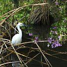 Egret Pond by kibishipaul