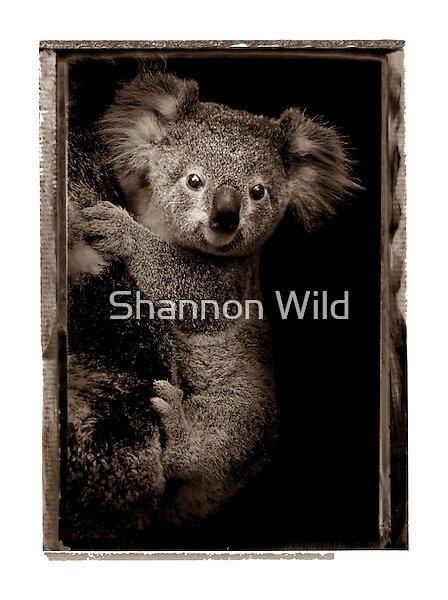 Koala Joey by Shannon Wild