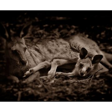 Kangaroo Mother and Joey by ShannonPlummer