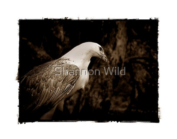 Eagle Landscape by Shannon Wild