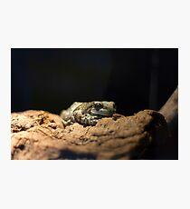 Amphibian  Photographic Print