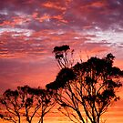 Sunrise delight by Steve Chapple