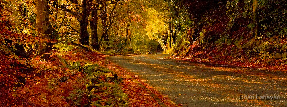 The road home by Brian Canavan