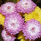 Spring Bouquet, Original Photography by Danielle Scott
