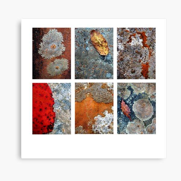 River Rock Lichen Canvas Print