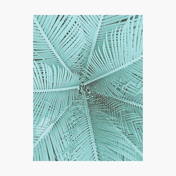 Turquoise Teal Palm Leaves Photographic Print