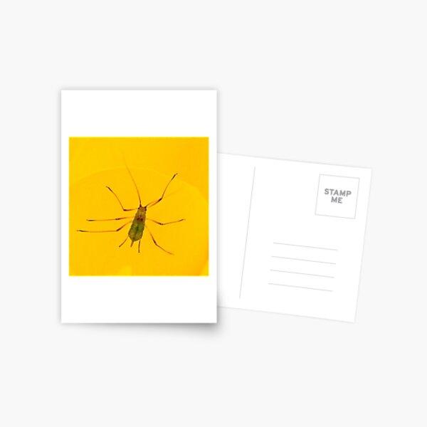transparent bug Postcard