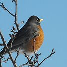 What are you searching for Robin? by sternbergimages