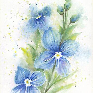 Veronica Blue Flower Watercolor by IvaW