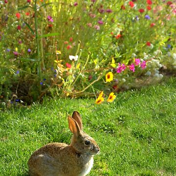 Bunny Rabbit With Wildflowers by DianaG